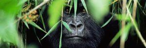 Les lois relatives à l'environnement en RDC